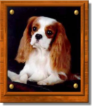 A Typical Cavalier Expression